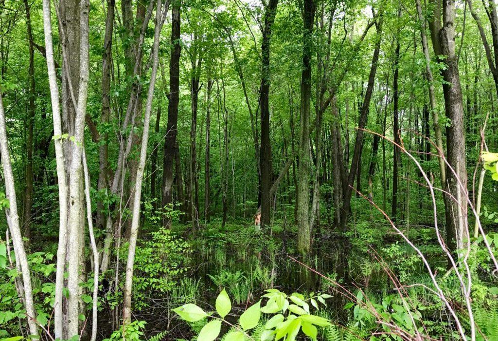 Carolinian Forest